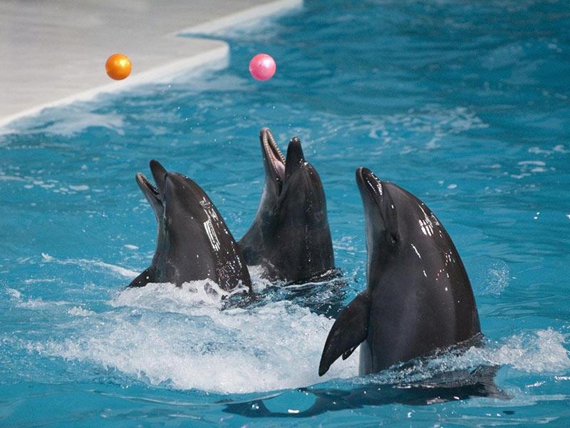 مجمع حديقة الدلافين في جزيرة كيش في ايران