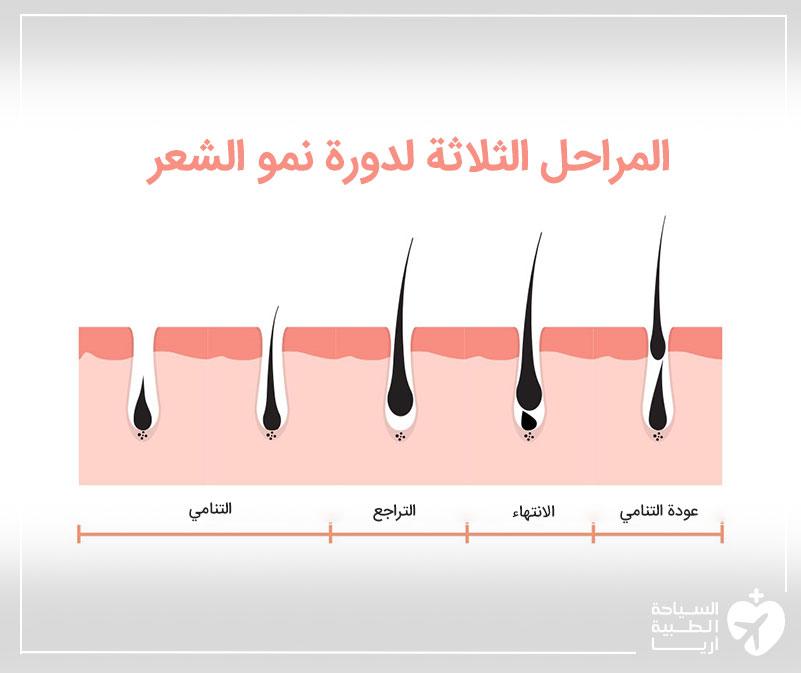 دورة نمو الشعر المكونة من 3 مراحل