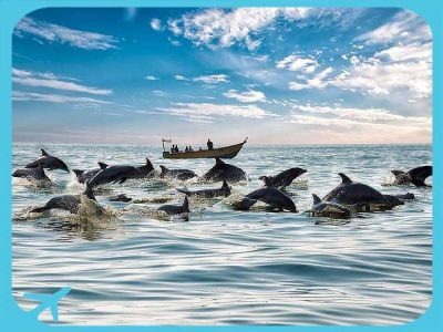 Dolphins in the Qeshm