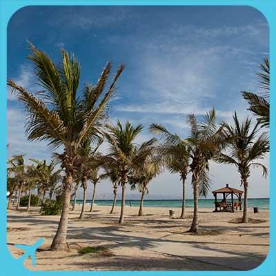 kish island and palm trees