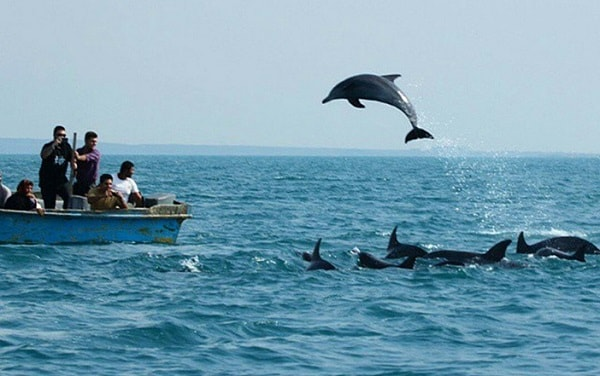 dolphins comin out of sea water in Hengam island