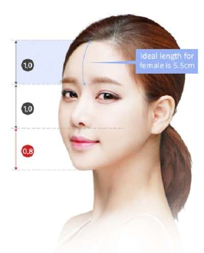 Ideal female face proportion showing ideal length of forehead