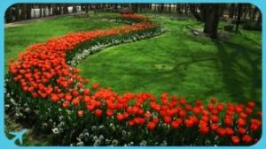 Spring in Mashhad Mellat Park
