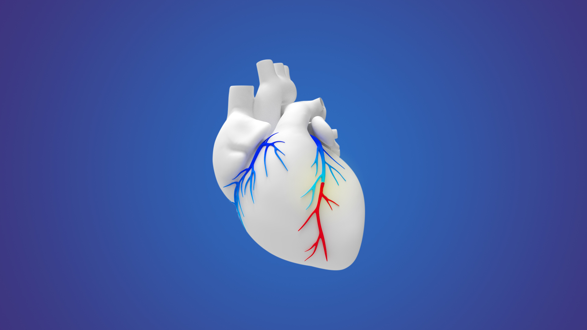 a white 3-D human heart with red and blue vessels on a blue background