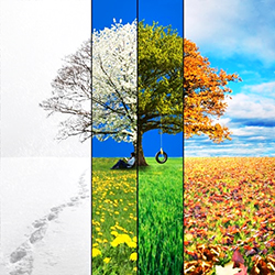 juxtaposed picture of a tree and flowers in different seasons