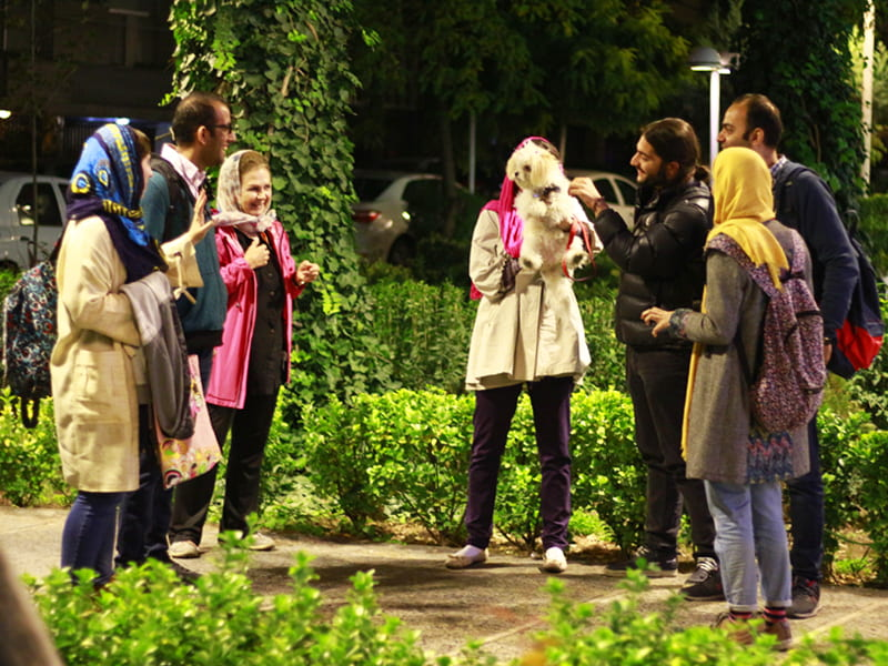 a group of Iranian people standing and talking in the streets of Tehran while they are playing with a dog