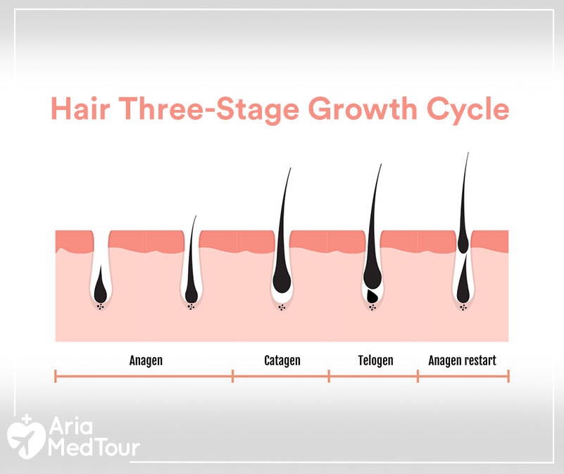 hair three stage growth cycle